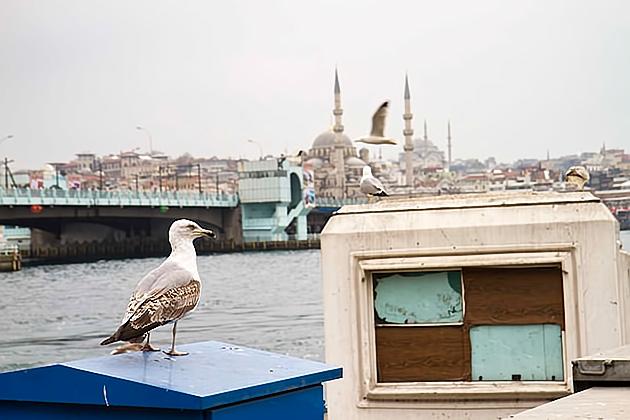 Seagul-Istanbul