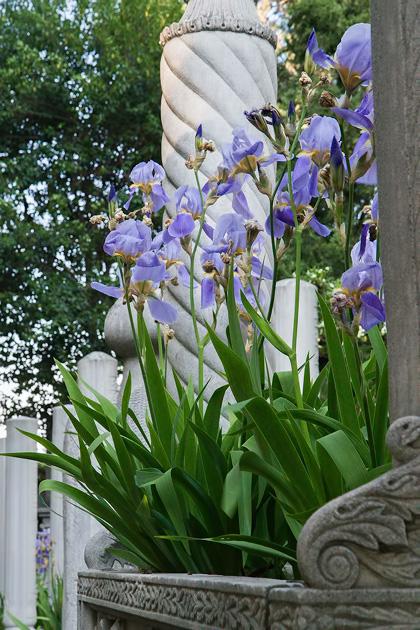 Süleymaniye Flowers