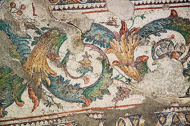 Mosaic Plants