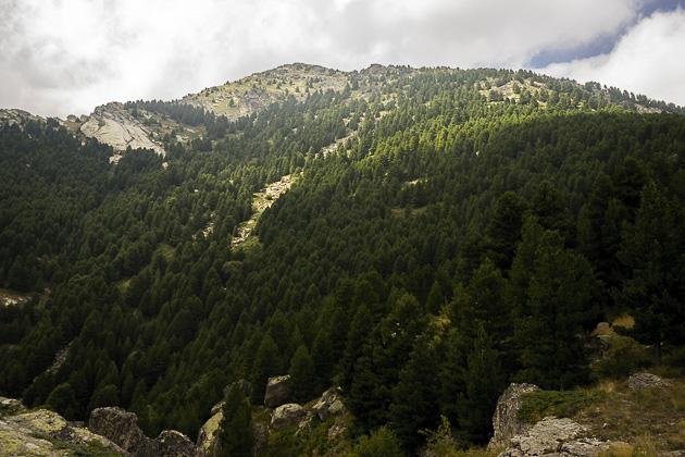 Pelister Hike