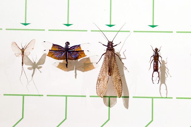 Insectarium Montreal
