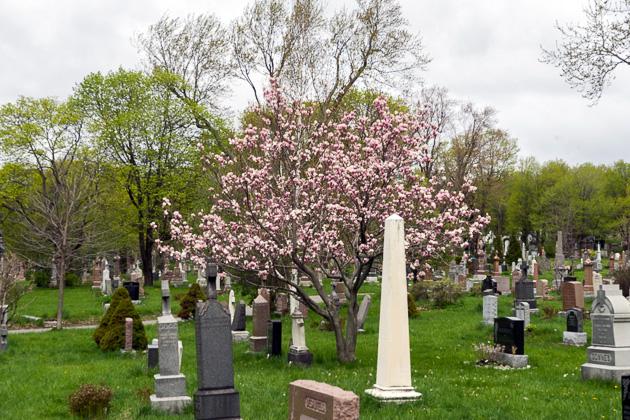 Mont Royal Cemeteries