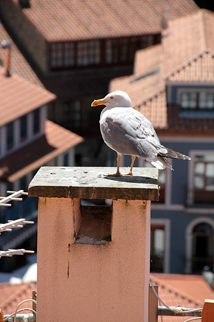 Bird Punk