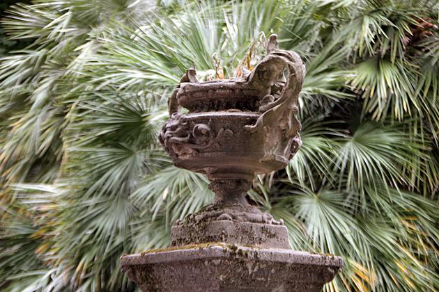 Bucket Palm