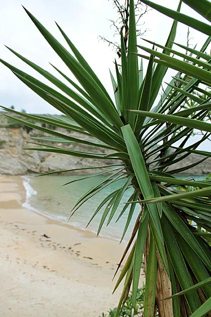 Llanes Beach
