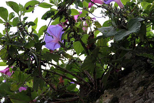 Llanes Flores