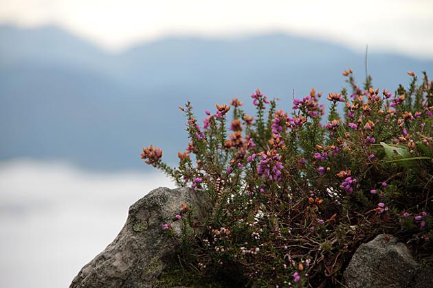 Herbs Asturias