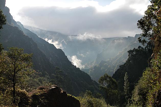 Jungle Spain