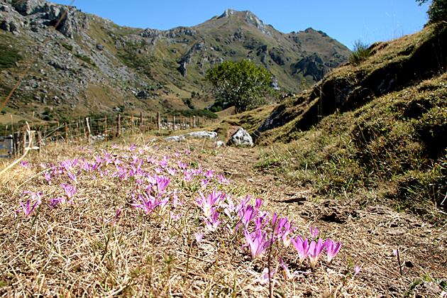 Flowers Asturias