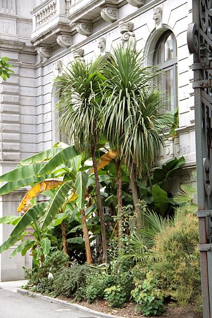 Oviedo, Spain Palm Trees