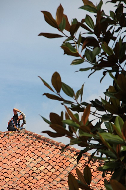 Roof Work with magnolia tree