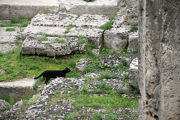 Sightseeing Cat Italy