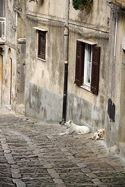 Sicilian Dogs