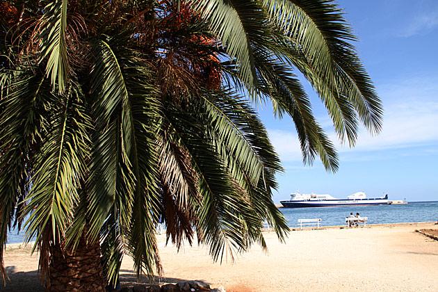 Palm Trees Palermo