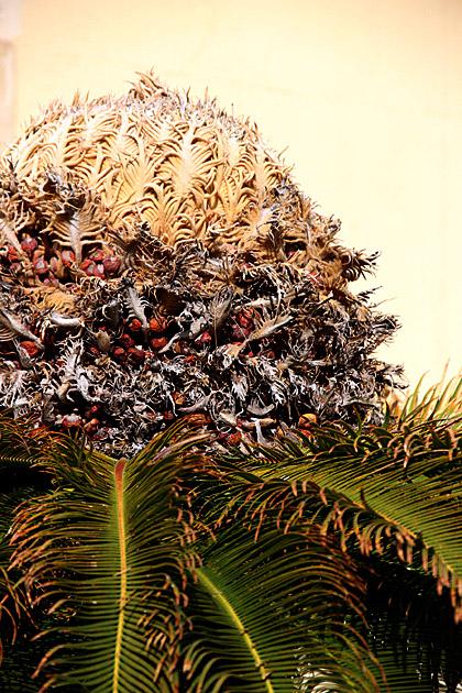 Palm Bud