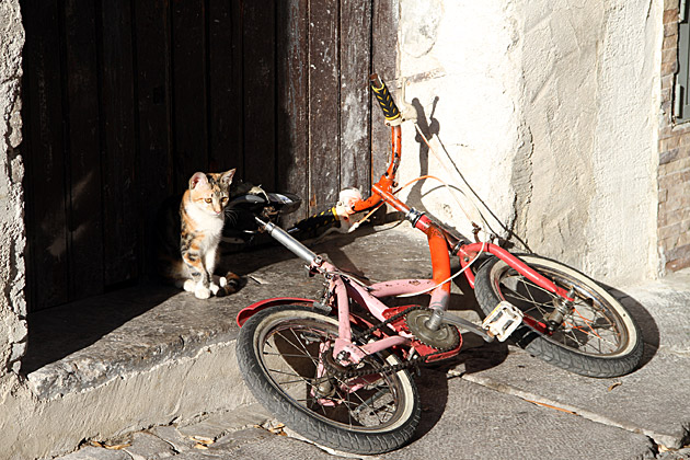Biking Cat