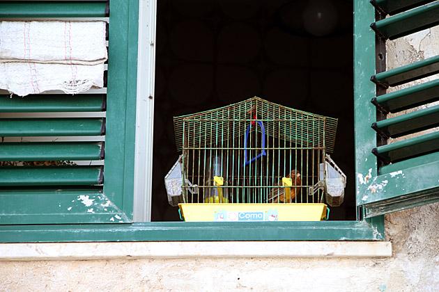 Trapani Bird