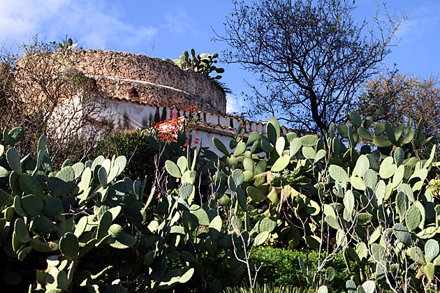 Cacti Sicily