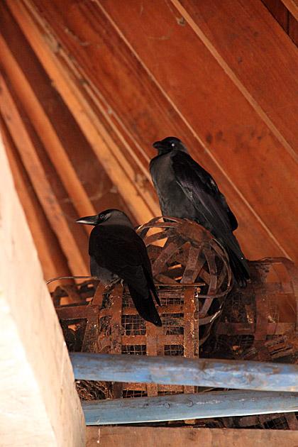 Vishnu Raven