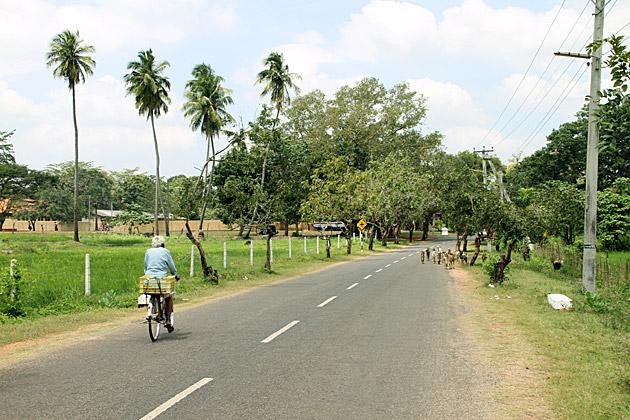 Bikind in Sri Lanka