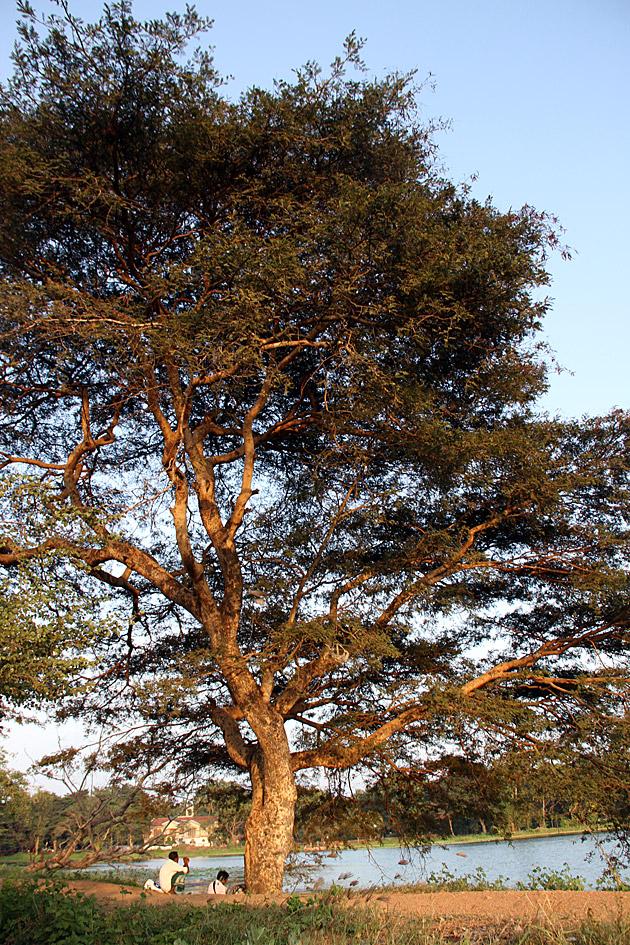 Sunset-Anuradhapura