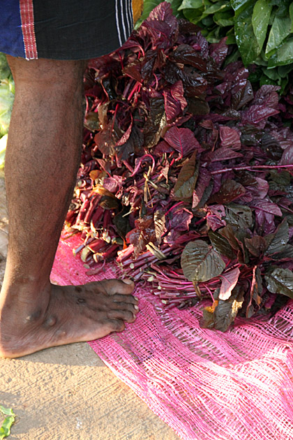 https://for91days.com/photos/SriLanka/Anuradhapura%20Market/Foot-Herbs.jpg