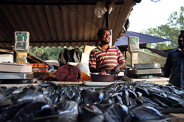 Selling Fish in Sri Lanka