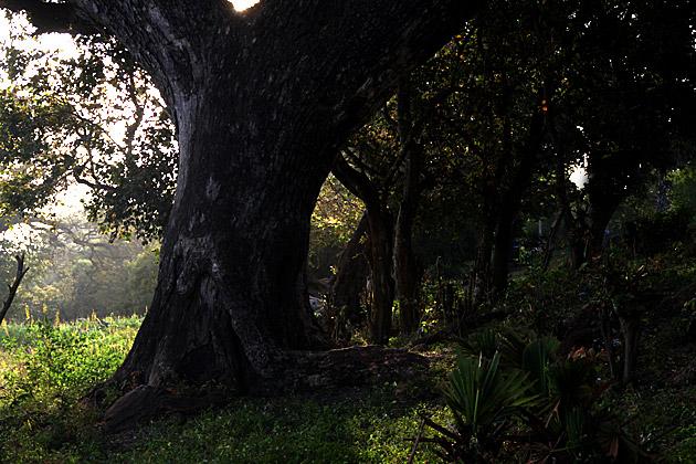 Anuradhapura-Shore