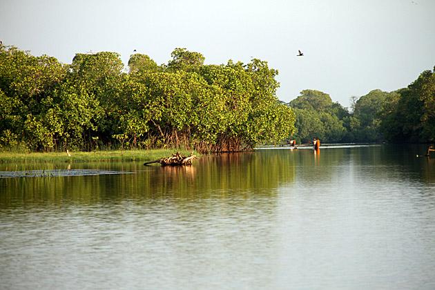 Arugam Bay Lagoon