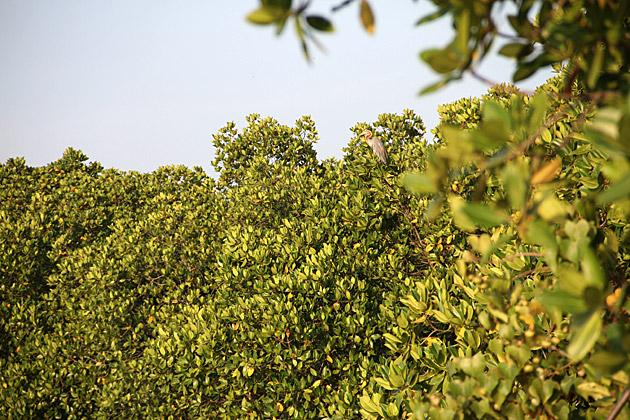 Brid Watching Sri Lanka