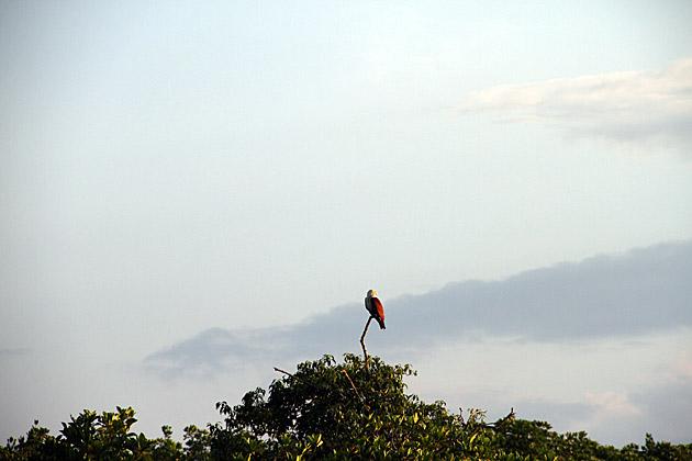 Eagle Morning