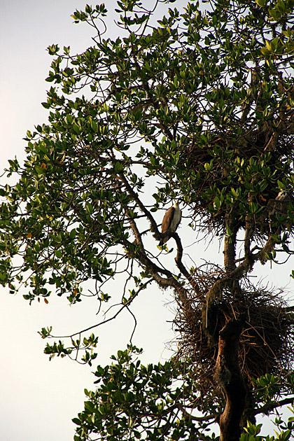 Eagle Nests