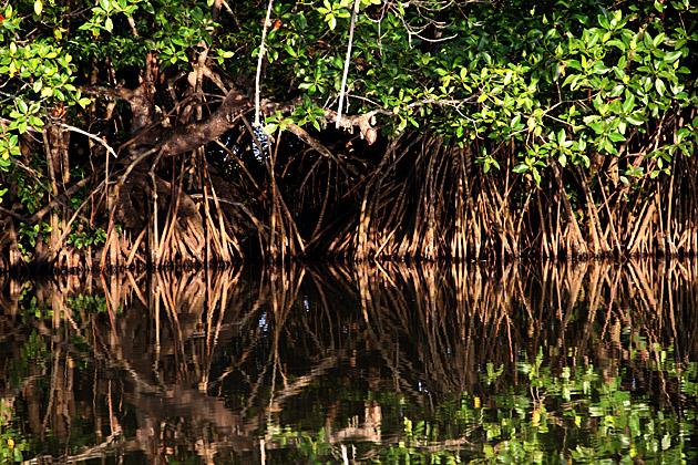 Magroves Sri Lanka