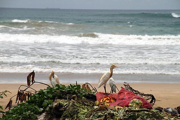 Trash Birds