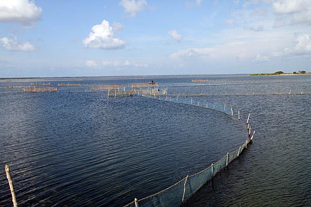 Nets Sri Lanka