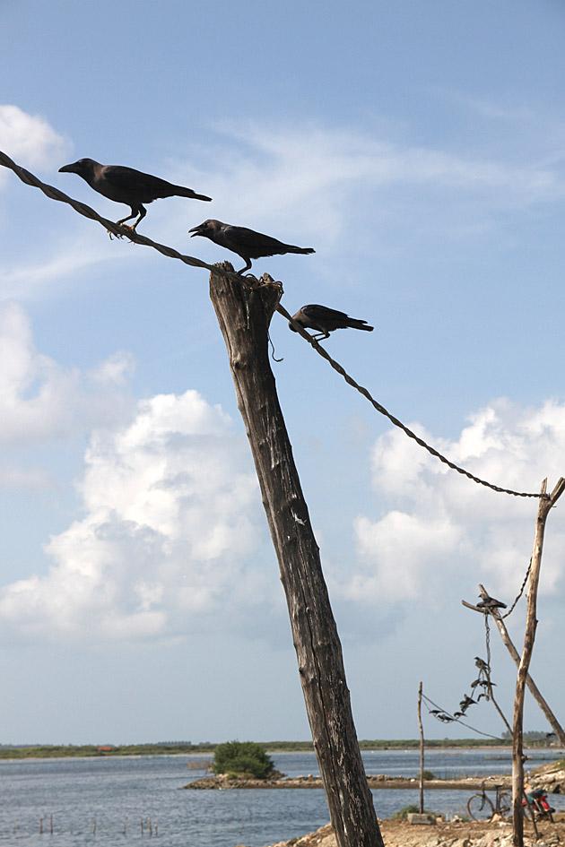 Raven String