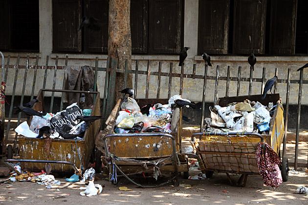 Trash Ravens