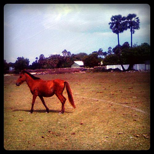 Delft Ponies