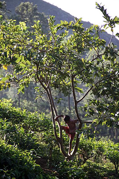 Climbing in Sri Lanka