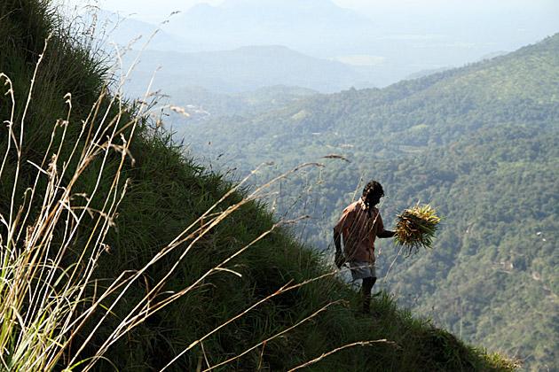 Gardening Sri Lanka