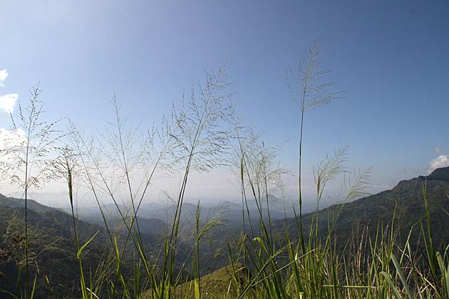 Nature in Sri Lanka