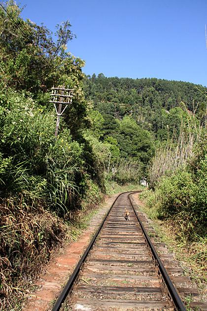 Train Track Hike Sri Lanka