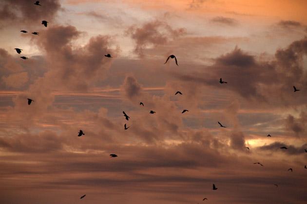 Bye Bye Birds