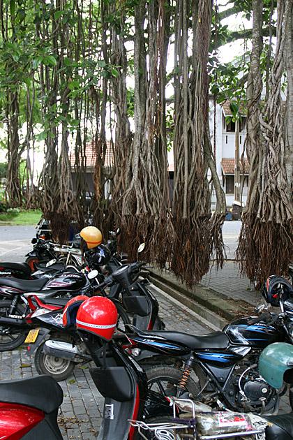Tarzan Parking