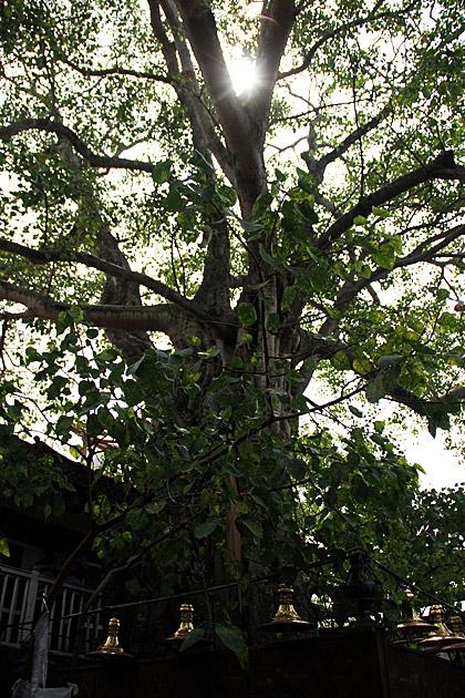 Bo-Tree-Gangaramaya