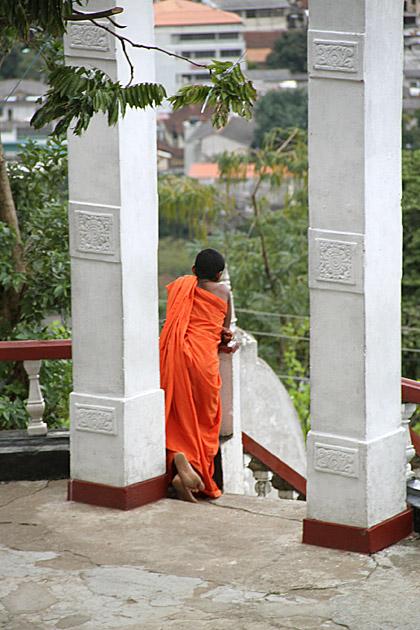 Buddha Rain