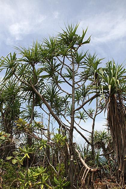 Plants Sir Lanka