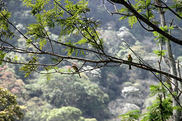 Bird Watchin in Sri Lanka