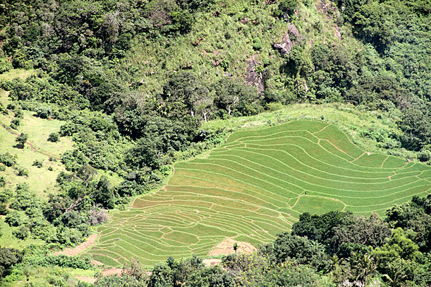 Sri Lanka Rice Fields