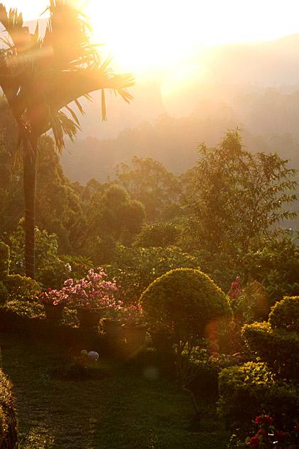 Alice-in-Wonderland-Sri-Lanka